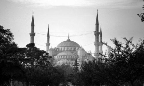 Zdjęcie TURCJA / brak / Istanbul / pajęczyna