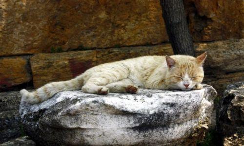 Zdjecie TURCJA / Południe / Hierapolis / antyczny kot