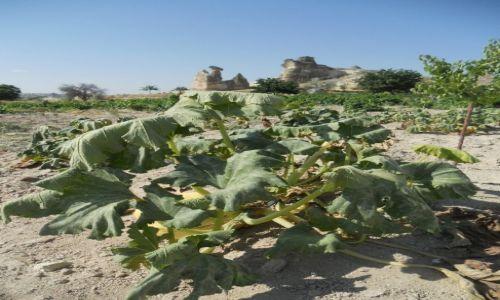Zdjecie TURCJA / Anatolia / Okolice Goreme / W ogrodach Kapadocji