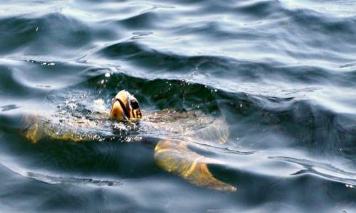 Zdjecie TURCJA / Azja mniejsza / Dolina rzeki  Daylan. / Miejsce lęgowe żółwi morskich.