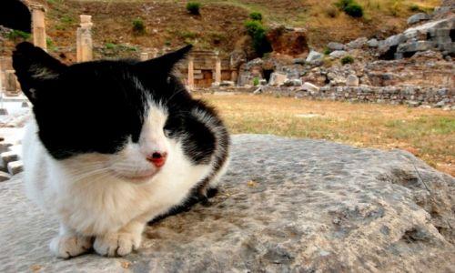 Zdjęcie TURCJA / efes / swiatynia  / aaa kotki ?