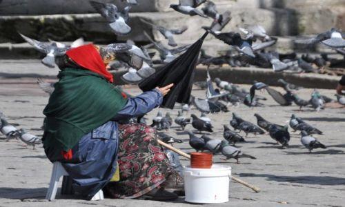 Zdjecie TURCJA / Istambuł / Istambuł / Sprzedająca karmę dla ptaków