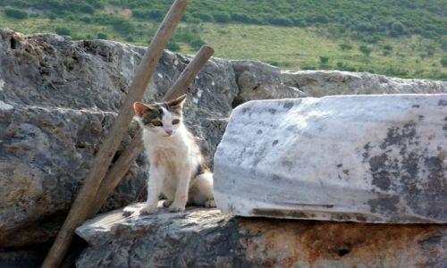 Zdjecie TURCJA / Efez / Efez / Kociak z Efezu