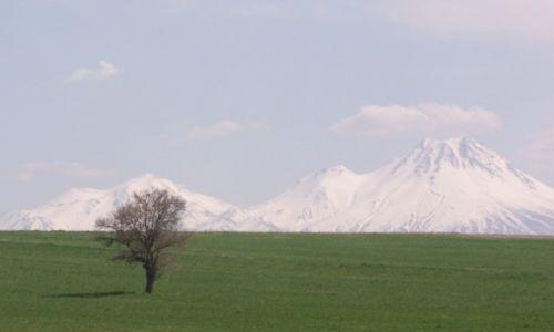 Zdjęcie TURCJA / Centralna Anatolia / Okolice Konya / Drzewko