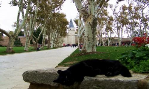 Zdjecie TURCJA / Stambuł / Park przy pałacu Topkapi / Leżę sobie