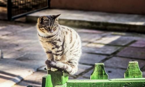 Zdjecie TURCJA / Riwiera Turecka / Bellis hotel / wlazł kotek...