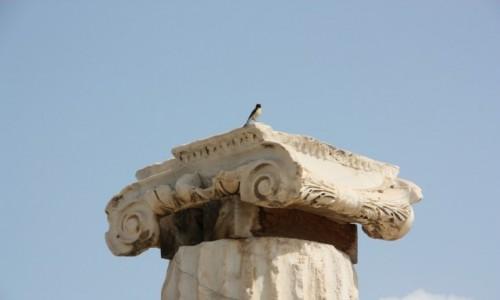 Zdjecie TURCJA / Anatolia / Hierapolis / Ptaszek ...