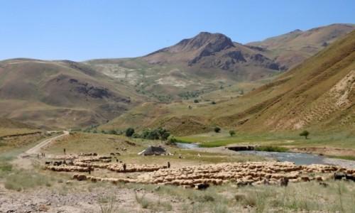 TURCJA / wschodnia Anatolia / Baskale / Wypas owiec w górskiej dolinie w Kurdystanie