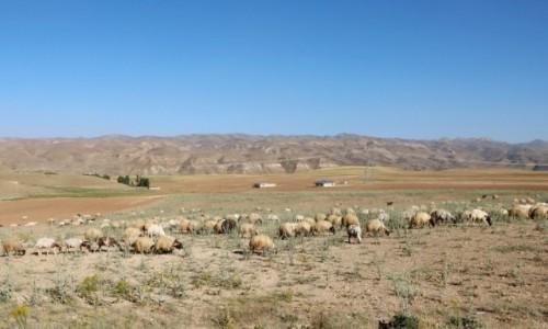 Zdjecie TURCJA / wschodnia Anatolia / Yanal / Przy granicy z Iranem