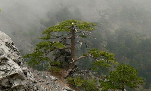 Zdjecie TURCJA / G�ry Toros Daglari / w pobli�u rzeki Goksu / podr�z w chmura