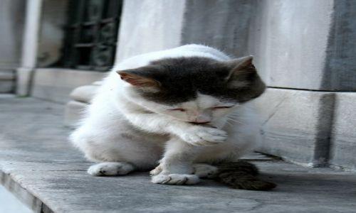 TURCJA / - / Stambuł / Kot