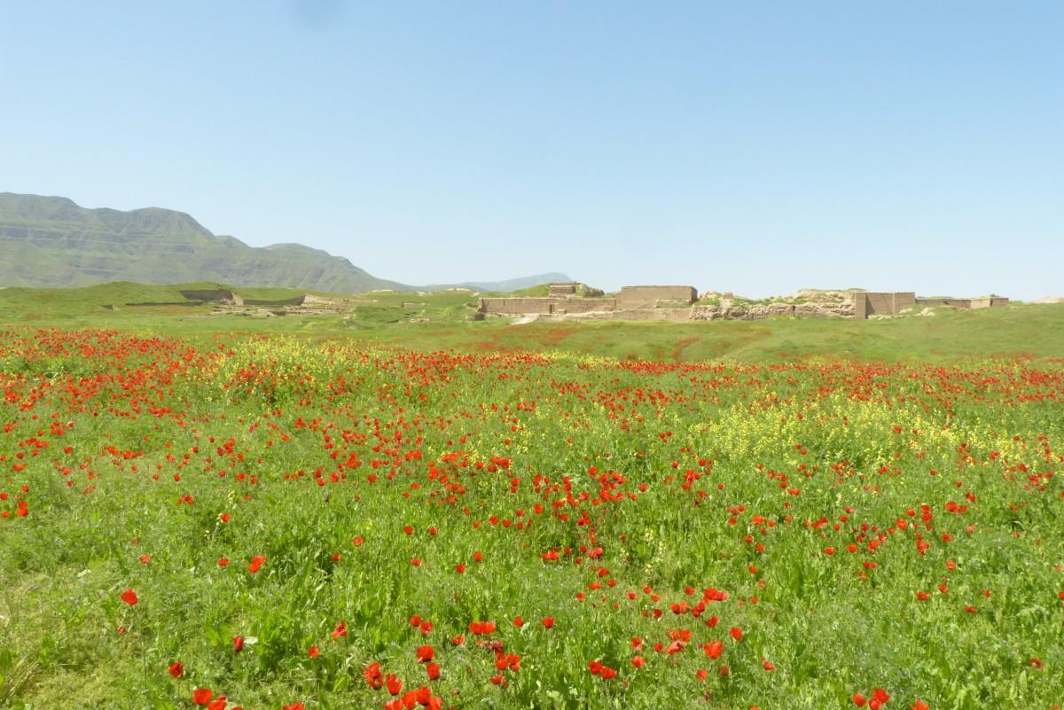 Zdjęcia: Nusay, Ashgabat, Maki, TURKMENISTAN