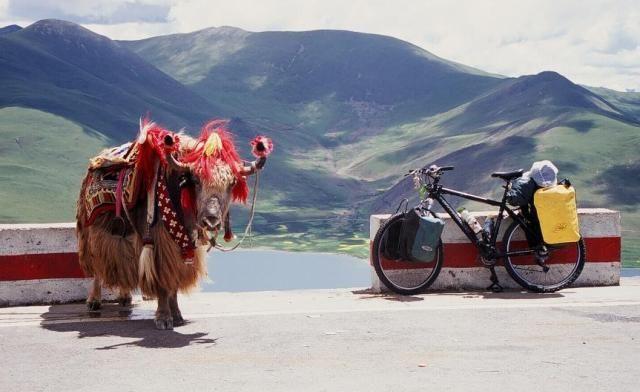Zdjęcia: Przełęcz Kampa, Tybet, Spotkanie, TYBET