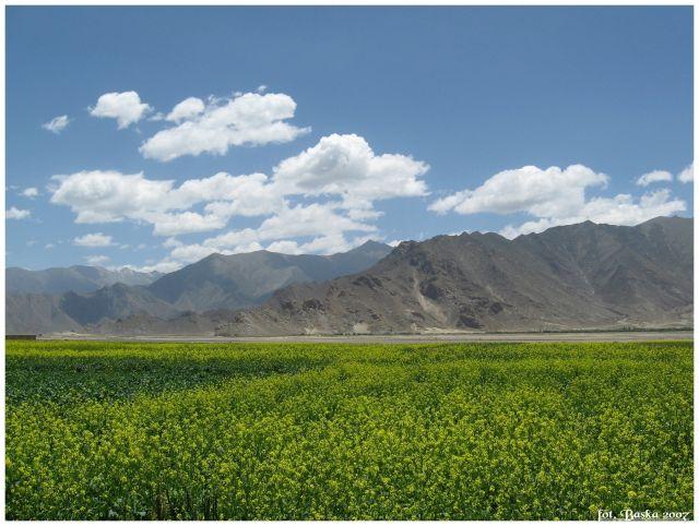 Zdjęcia: okol.Shigatse, Himalaje, Kwitnący Tybet, TYBET