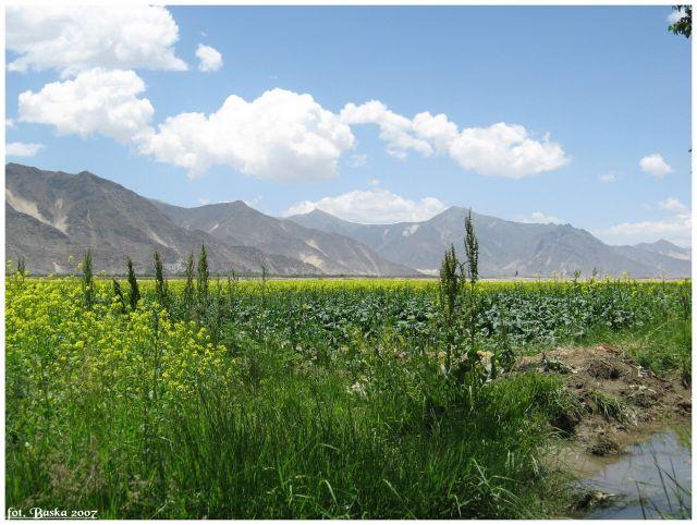 Zdjęcia: okol.Shigatse, Himalaje, Z cyklu Zielone pola Tybetu, TYBET