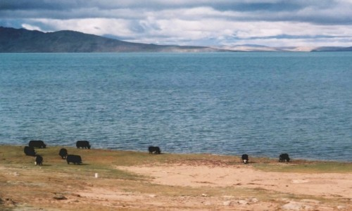 Zdjecie TYBET / Tybet północno - wschodni / trasa kolejowa Golmud - Lhasa / Tybet 17