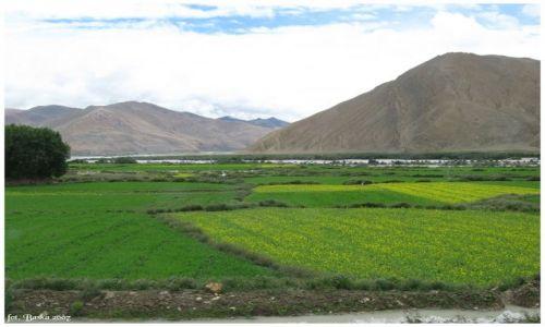 Zdjecie TYBET / Himalaje / droga Tingri-Base Camp / Trochę zieleni...