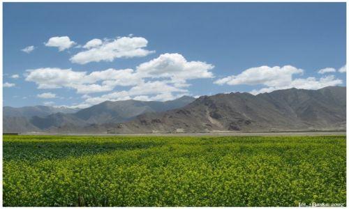 Zdjecie TYBET / Himalaje / okol.Shigatse / Kwitnący Tybet