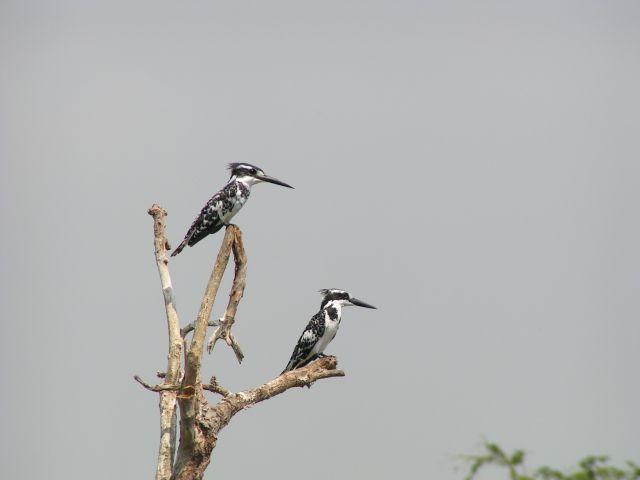 Zdjęcia: Murchison Falls, ptaki, UGANDA