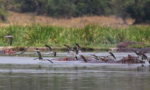 UGANDA / Murchison Falls NP / Victoria Nile / Nad Nilem Wiktorii