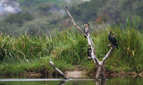 Zdjęcie UGANDA / Murchison Falls NP / Victoria Nile / Wolnych miejsc brak