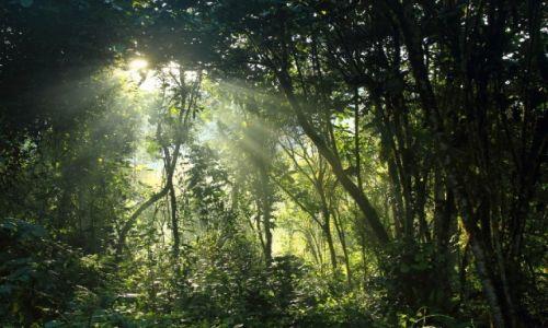 Zdjecie UGANDA / - / okolica Kisoro / dżungla