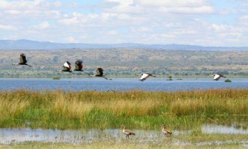Zdjecie UGANDA / Masindi / Murchison Falls NP / Nad Nilem Wiktorii