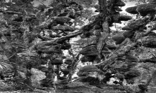 Zdjęcie UGANDA / Rwenzori / Rwenzori / Pierwotna dżungla