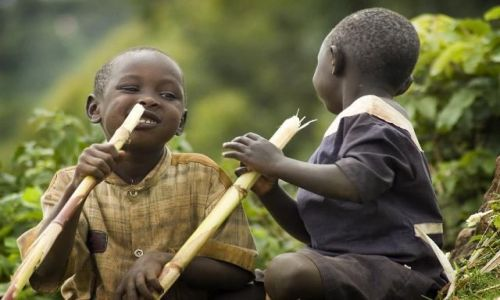 Zdjęcie UGANDA / Sipi Falls / Sipi Falls / Posiłek