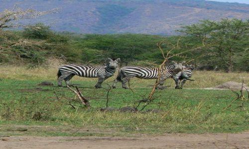 Zdjecie UGANDA / - / Park Narodowy Lake Mburo / Typowe afryka�s