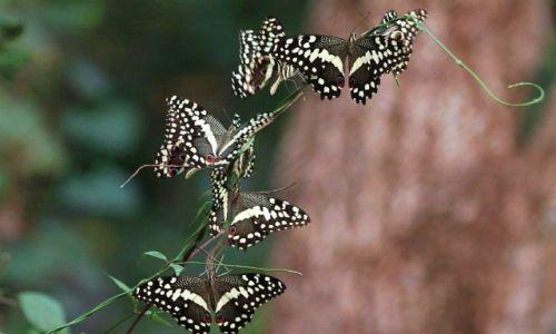 Zdjęcie UGANDA / - / Budongo Forest / Konkurs Cuda Natury