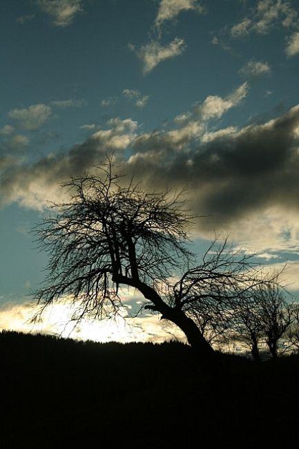 Zdjęcia: Bereżnica, Huculszczyzna, Drzewo, UKRAINA