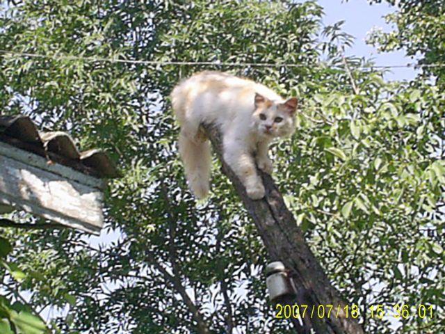 Zdjęcia: meżyriv, podole, kot, UKRAINA