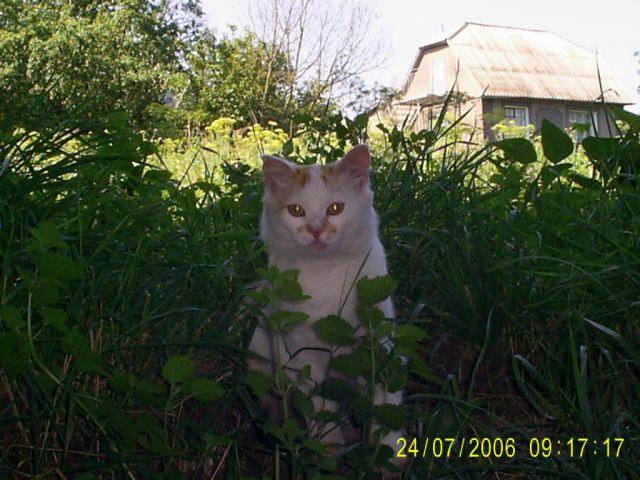 Zdjęcia: kotek, UKRAINA