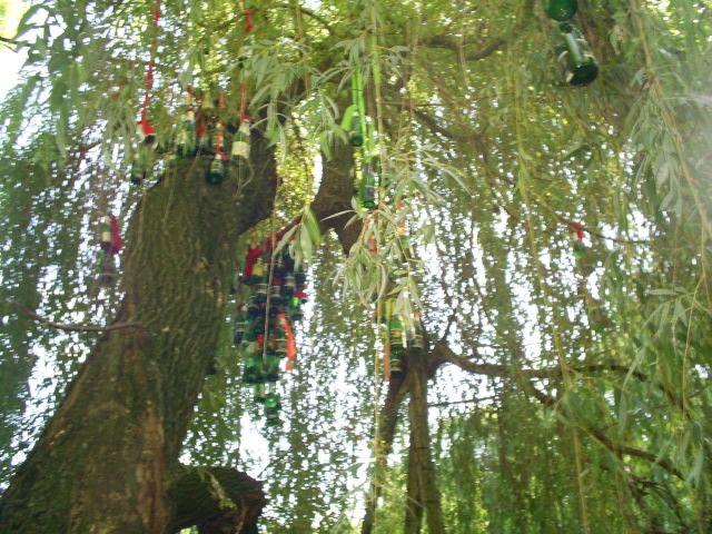 Zdjęcia: Braiłów, podole,  na drzewie, UKRAINA