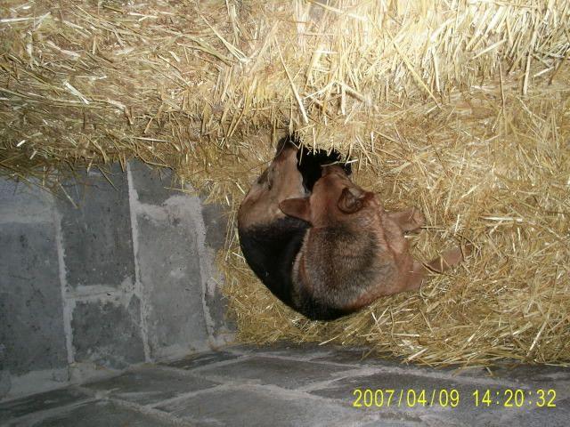 Zdj�cia: okolice Ternopola, podole, psia mama, UKRAINA