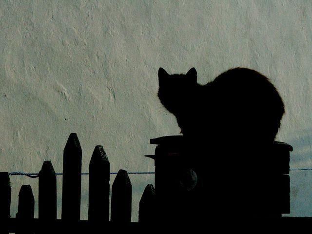 Zdjęcia: Wylkowa, Kot nie wiem już który, UKRAINA