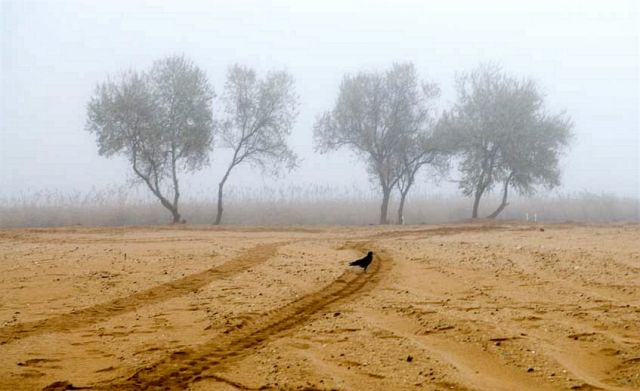 """Zdjęcia: Wschodnia Ukraina, złota """"pustynia"""", UKRAINA"""