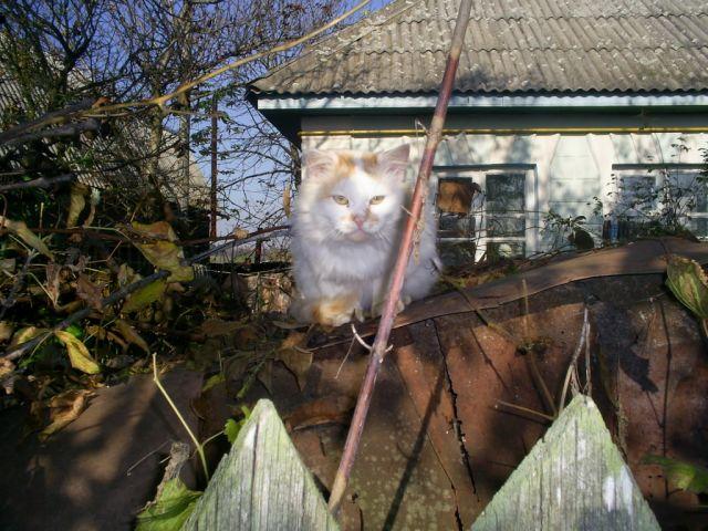 Zdjęcia: Meżyriw, podole, koteczek, UKRAINA