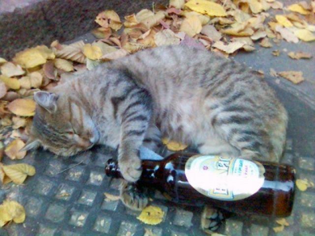 Zdjęcia: Lwów, nie ma jak to dobre piwko, UKRAINA