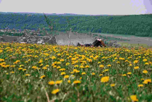 Zdjęcia: Dniestr, łąka, UKRAINA
