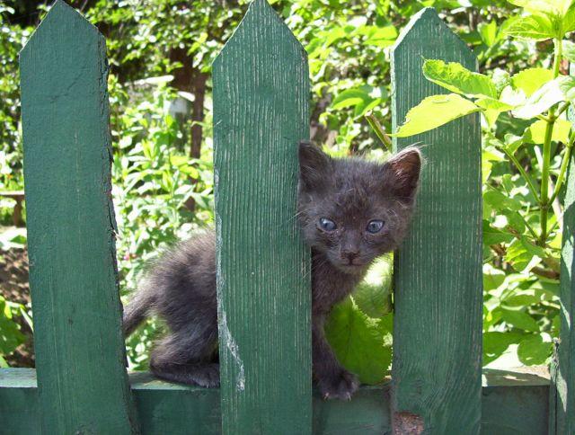 Zdjęcia: halicz, kot, UKRAINA