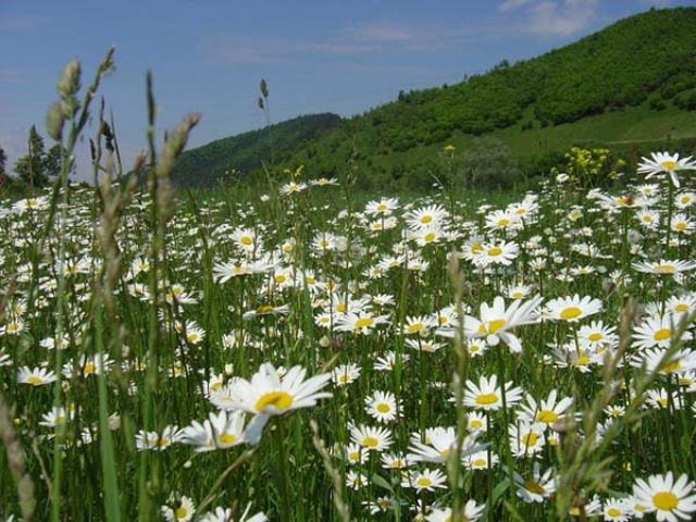Zdj�cia: karpaty zachodnie, widoczek, UKRAINA