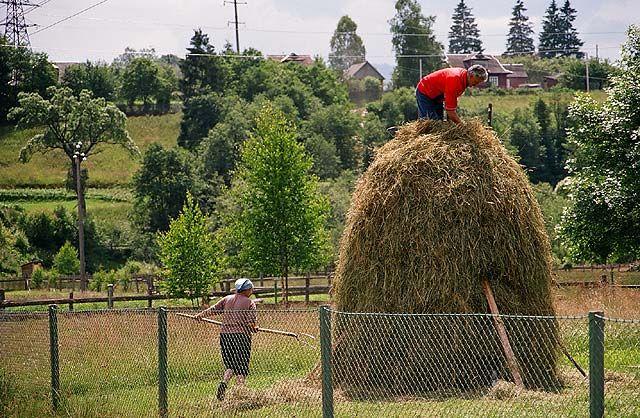 Zdjęcia: Worochta, Ukraina Zachodnia, sianokosy, UKRAINA