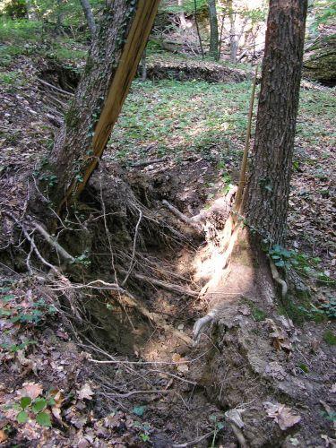 Zdjęcia: 'SOKOLINSKOJE LESNICZESTWO', KRYM, osuwisko- drzewo dalo rade, w polowie..., UKRAINA