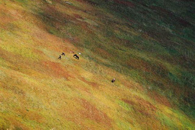 Zdjęcia: gory  koło wiekiego wierchu, jagodzarze i koniki, UKRAINA