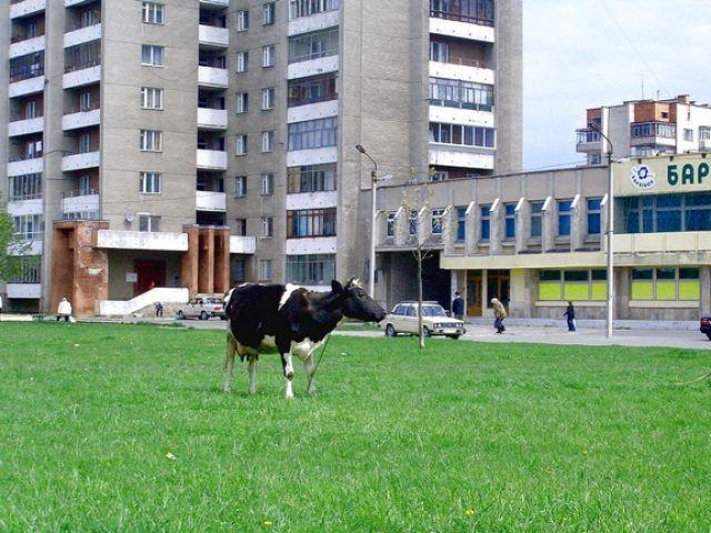 Zdj�cia: Lw�w, Pastwisko?, UKRAINA