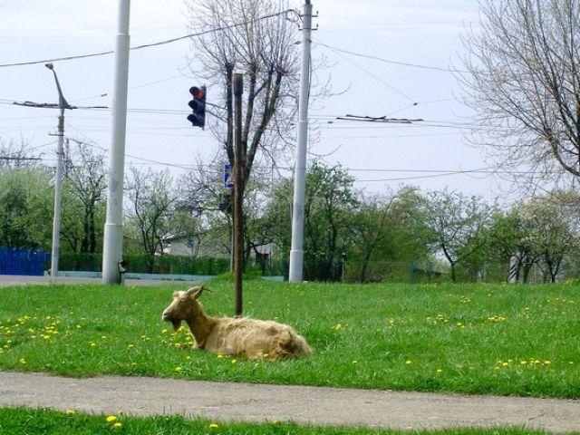 Zdjęcia: Lwów, ...Chyba tak, UKRAINA