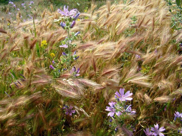 Zdjęcia: Czufut Kale, Półwysep Krymski, roślinność, UKRAINA