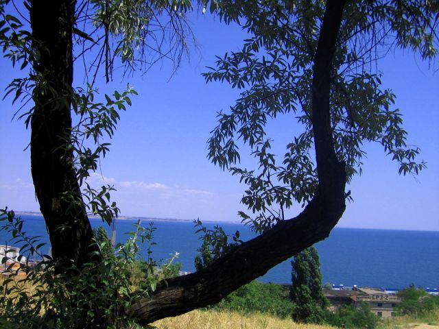 Zdjęcia: Odessa, Wybrzeże Morza Czarnego , Liściasta ramka wybrzeża, UKRAINA